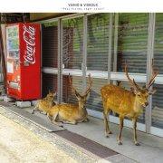 VAINIO & VIGROUX / Peau Froide, Léger Soleil (CD/2LP) - sleeve image