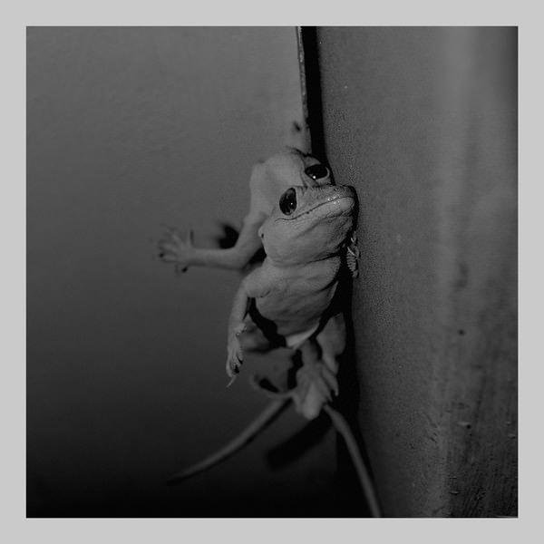 LASSE MARHAUG, JON WESSELTOFT / Nature Lovers (LP)