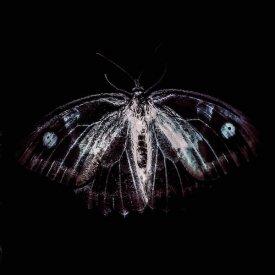 PHILL NIBLOCK, KASPER T.TOEPLITZ & FRANCK VIGROUX / BestiaIRE (LP)