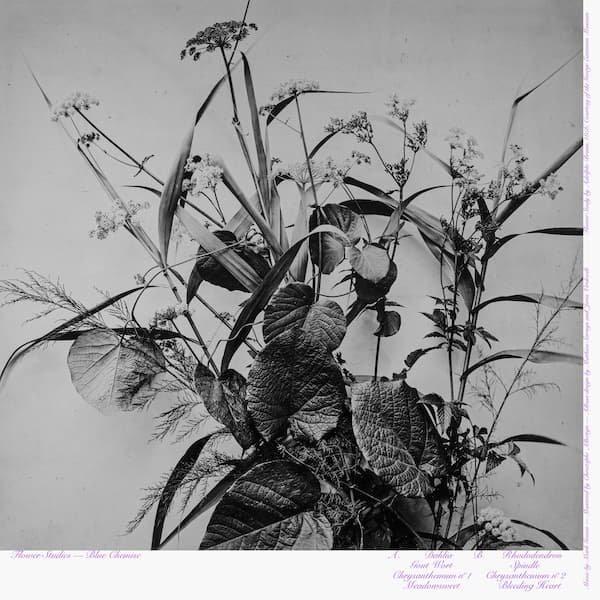 BLUE CHEMISE / Flower Studies (LP+DL)