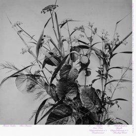 BLUE CHEMISE / Flower Studies (LP+DL) - sleeve image
