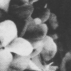 Various / Stages Of Grief Vol. III: Acceptance (Part 2) (Cassette) - sleeve image