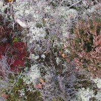 FURSAXA / Mycorrhizae Realm (CD/LP)