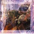 SEAN MCCANN / Our Silhouette (LP)