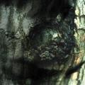 YANN TIERSEN / La Valse des Monstres (Reissue) (CD)