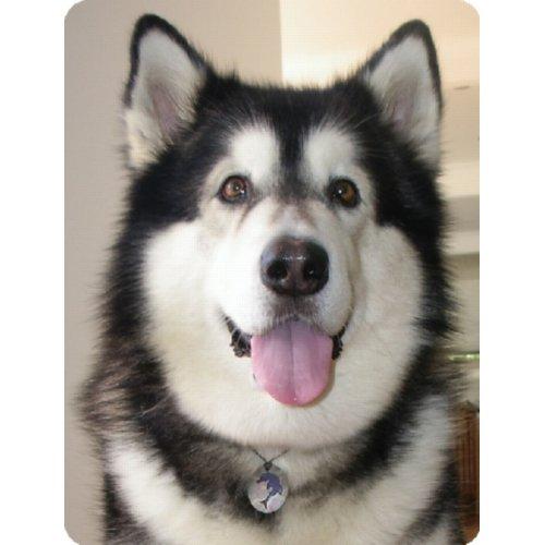 テスラ 大型犬用ペンダント