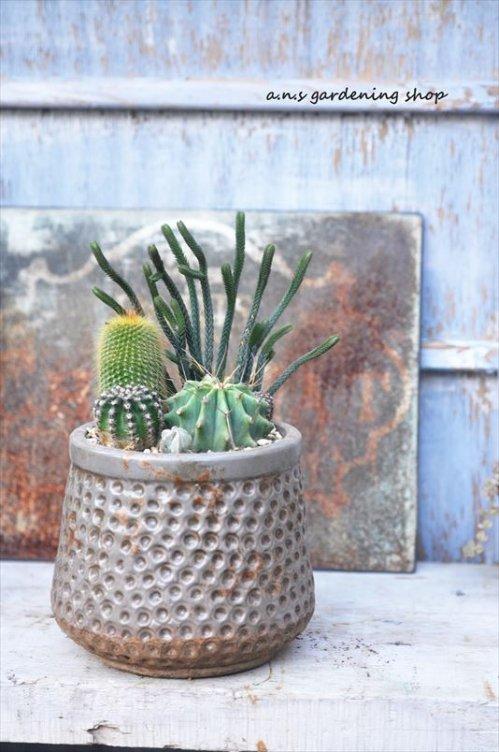 アンティーク鉢にサボテン寄せ植え