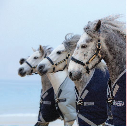 HORSE WARE  ホースクッション NO.2 限定品