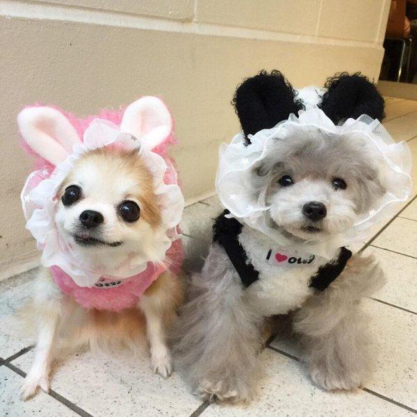 【送料無料】ウサギとパンダ・もこもこパーカー(2色)