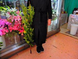 【生花】緑がさわやかなクジャクヒバ 枝物