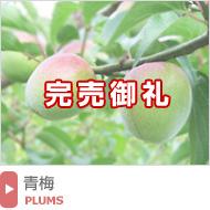 紀州南高梅の青梅(梅酒・梅シロップ用)