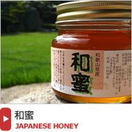 【和蜜(わみつ)】日本蜜蜂が集めた【幻のハチミツ】