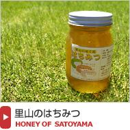 国産天然蜂蜜【里山のはちみつ】