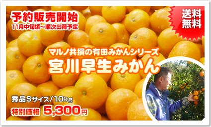 <img class='new_mark_img1' src='//img.shop-pro.jp/img/new/icons51.gif' style='border:none;display:inline;margin:0px;padding:0px;width:auto;' />《秀品》【有田みかん】マルノ共撰【早生みかん(宮川早生)】《Sサイズ/10kg》【送料無料】