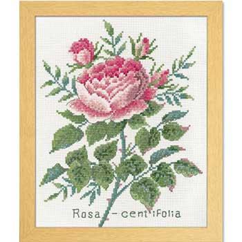 オリムパス 刺繍キット ローザセンティフォーリア 7504