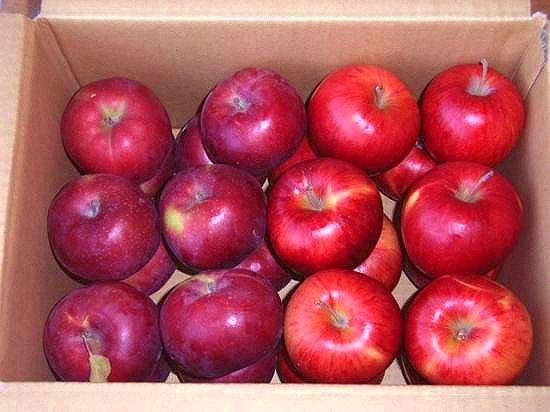 【早期予約】オホーツク産リンゴのお試し2色パック/旭&つがる