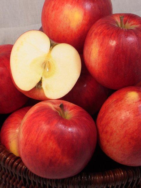【早期予約】オホーツク産りんご「つがる」/寒冷地育ちの爽やかな甘さ Lサイズ 5Kg