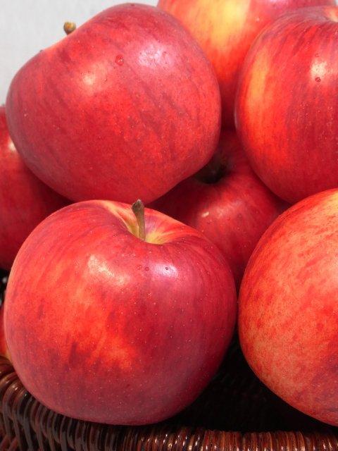 【早期予約】オホーツク産りんご「つがる」/寒冷地育ちの爽やかな甘さ  Lサイズ 10Kg