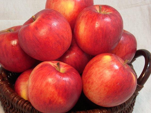 【早期予約】オホーツク産りんご「つがる」/寒冷地育ちの爽やかな甘さ  LLサイズ 10Kg