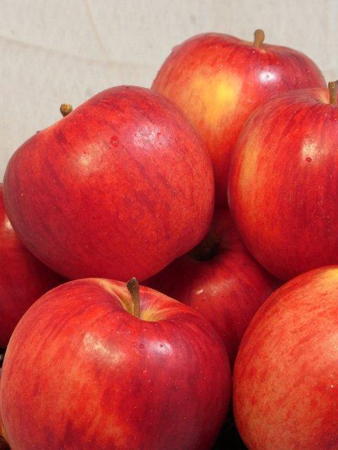 【早期予約】オホーツク産りんご「つがる」/寒冷地育ちの爽やかな甘さ  LLサイズ 5Kg