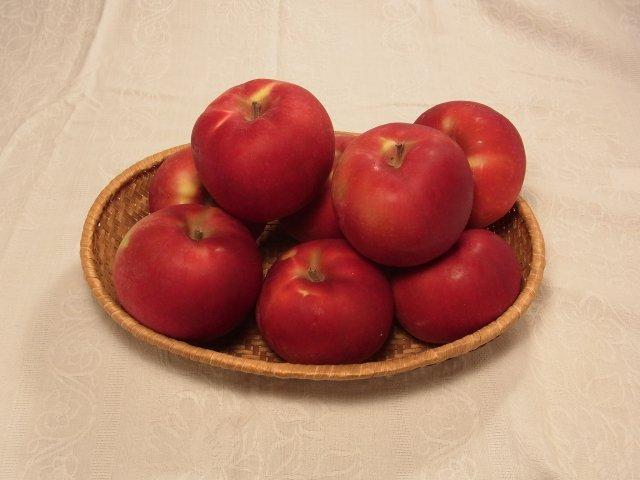 オホーツク産「旭」/昔懐かし甘酸っぱいりんご Mサイズ 4Kg【セール価格】