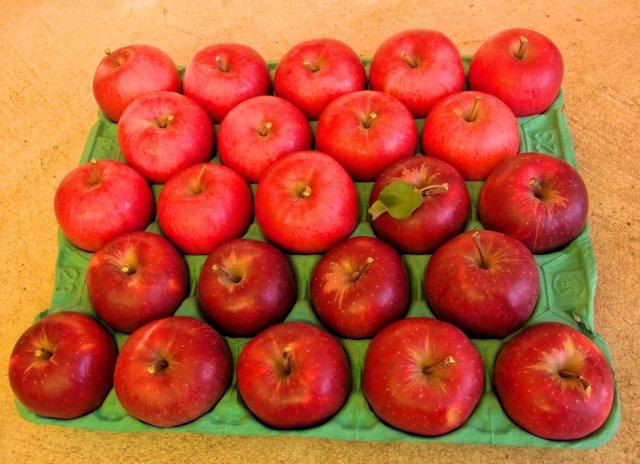 オホーツク産りんごの詰合せ 28〜54玉3種以上 約10Kg【クール便】
