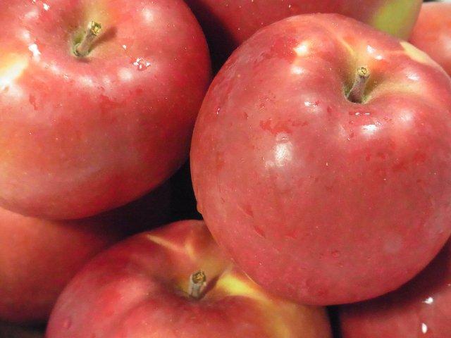 【最終セール】オホーツク産「旭」/昔懐かし甘酸っぱいりんご Lサイズ 4Kg