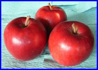 オホーツク産りんご「紅つがる」/寒冷地育ちの鮮紅色  LLサイズ 10Kg
