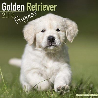 2018ペットカレンダー 65「ゴールデンレトリバー/パピー」 (英国製)