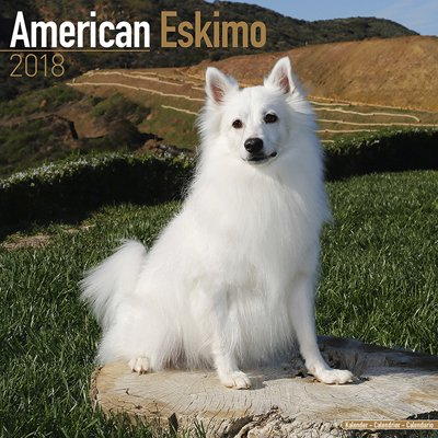 2018ペットカレンダー 75「アメリカンエスキモー」 (英国製)