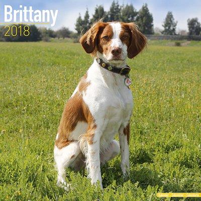 2018ペットカレンダー 98「ブリタニー」 (英国製)