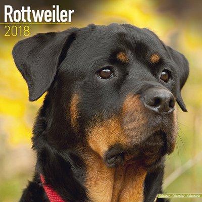 2018ペットカレンダー 107「ロットワイラー」 (英国製)