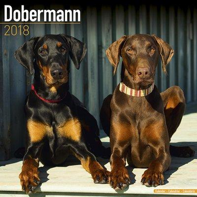 2018ペットカレンダー 137「ドーベルマン/EU/断耳なし」 (英国製)