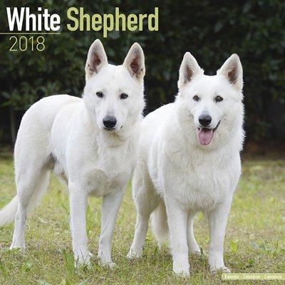 2018ペットカレンダー 140「ホワイトシェパード」 (英国製)