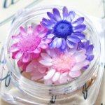 ◎【ドライフラワー】9輪 3色ミックス スターフラワー 《わたあめ》 [小花,プリザーブドフラワー,花材,flower,紫,ピンク,春]