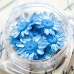 【ドライフラワー】9輪 単色 スターフラワー 《ソーダ》 [小花,プリザーブドフラワー,花材,flower,青]