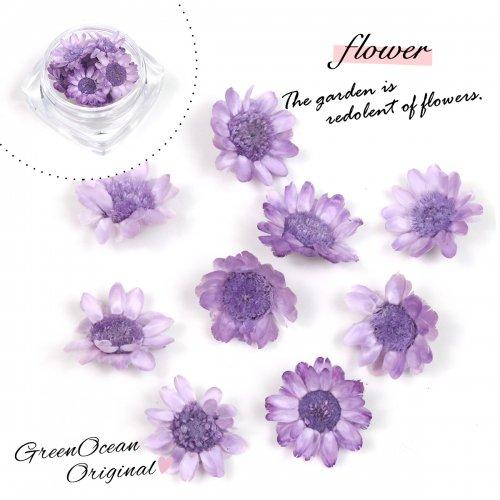 【ドライフラワー】9輪 単色 スターフラワー 《ぶどう》 [小花,プリザーブドフラワー,花材,flower,グレープ,紫]