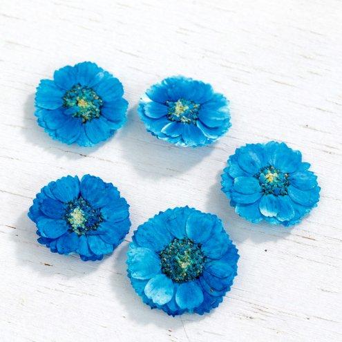 【押し花】5枚 エゾノコギリソウ  《ネオンブルー》 [花,はな,フラワー,ドライフラワー,flower,ドライフラワー,青色,ブルー,マーガレット]