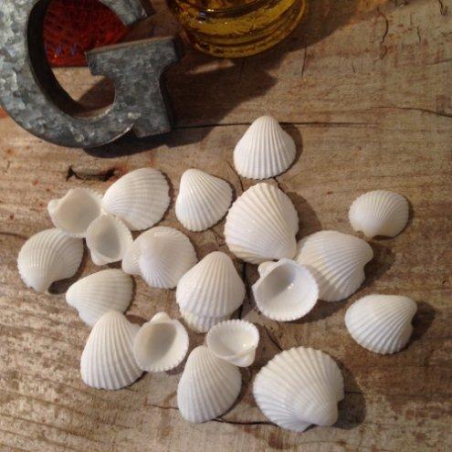 【貝殻セット】ちっちゃな白い貝がら《ホワイト》(10g) ◎◎