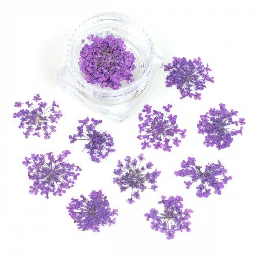 ■今だけ限定価格【押し花】10枚 レースフラワー 《グレープ》 [紫,おしばな,花,プリザーブドフラワー,カラフル]◎◎