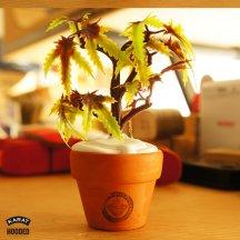 POT PLANT【KARAT】