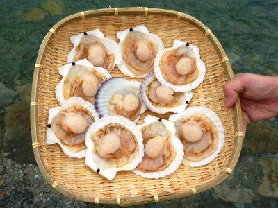 [冷凍] 北海道産ホタテ 10個 ※片面殻付き