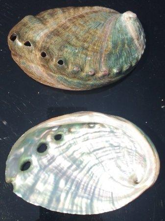 アワビの貝殻粉末10g ※非加熱の為、希少品