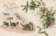 アンティーク ポストカード クリスマス ヒイラギ ネコ