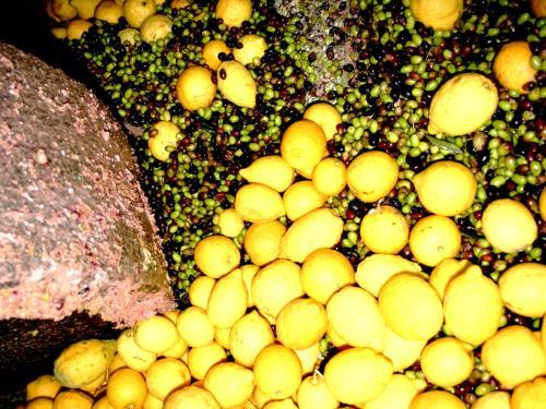 エキストラヴァージン【レモン】オリーブオイル ディサンティ 250mlの写真3