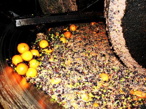 エキストラヴァージン【オレンジ】オリーブオイル ディサンティ 250mlの写真3