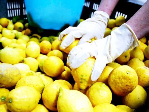 エキストラヴァージン【レモン】オリーブオイル ディサンティ 500mlの写真1