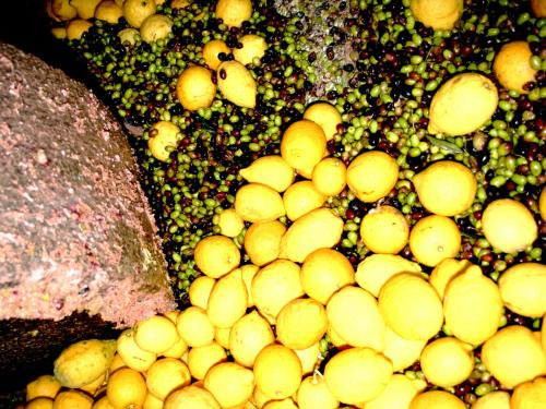 エキストラヴァージン【レモン】オリーブオイル ディサンティ 500mlの写真3