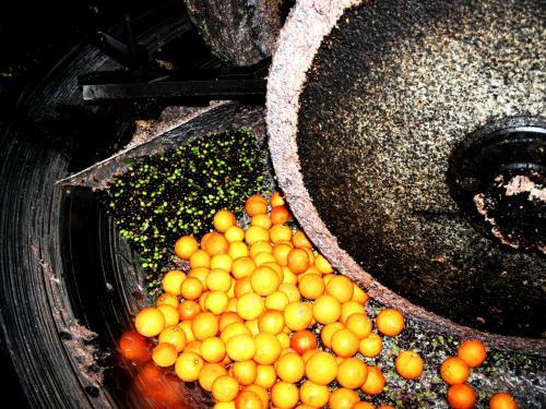 エキストラヴァージン【オレンジ】オリーブオイル ディサンティ 500mlの写真2