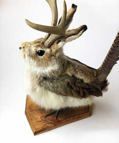 IMPORT / JACKALOPE taxidermy